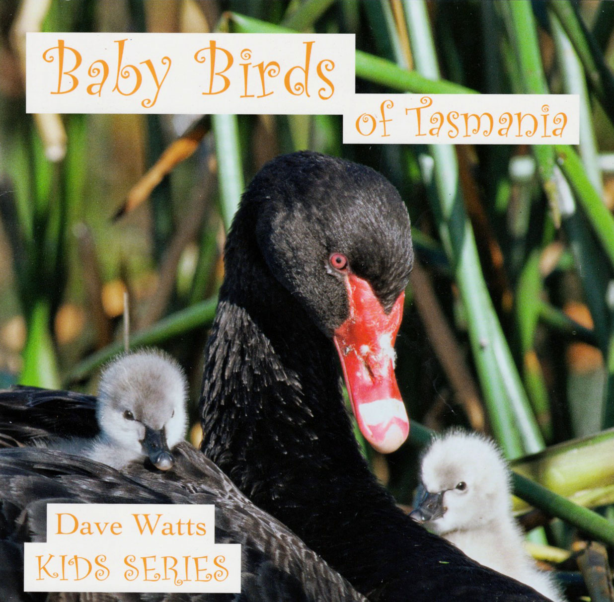 Baby Birds of Tasmania - Kids Series