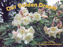 Our Golden Dream