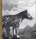 Tasmanian Tiger - Precious Little Remains